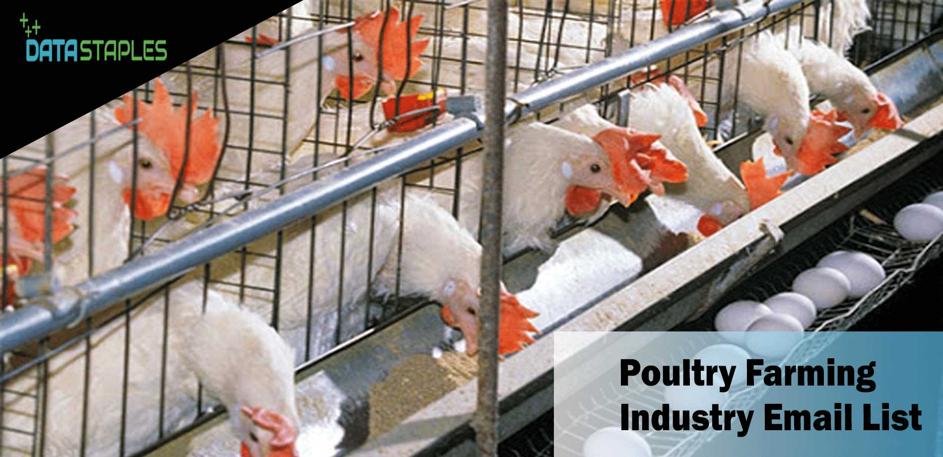 Poultry Farming Industry Email List | DataStaples